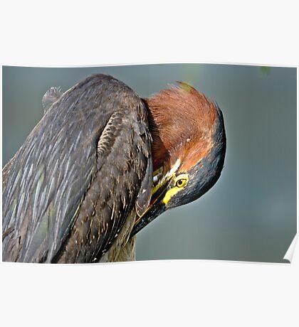 Green Heron Pruning Poster