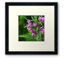 Vivid Nature Squared Framed Print