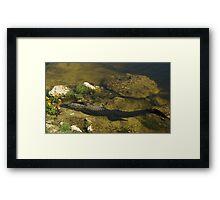 Gator n FLower Framed Print