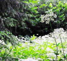 White forest flowers of Latvija 2 by Rita Analise Kaulina
