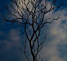 Tree Entwined by Jason Lee Jodoin