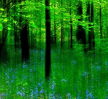 Bluebell Fantasy by Tarrby