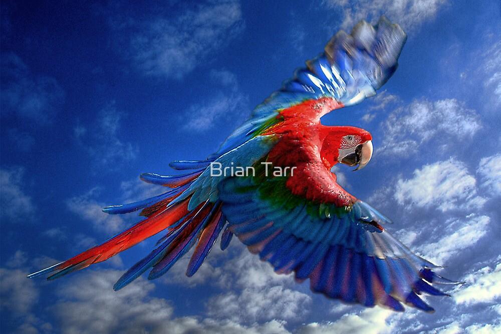 Macaw in Flight by Tarrby