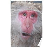 Wise old snow monkey, Japan Poster