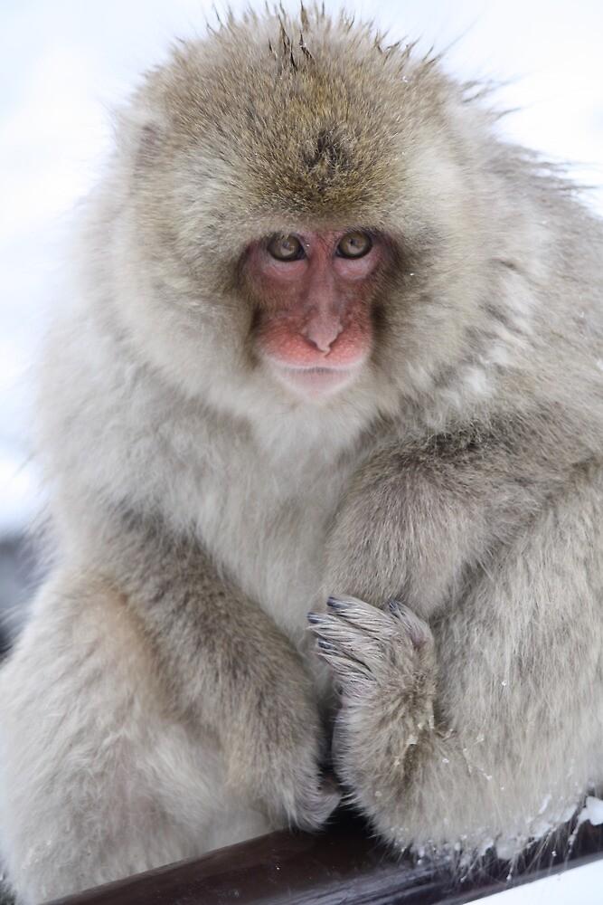 Wearing my winter best by JulieKyte