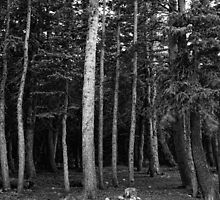 Forest Tree Views in Black and White  by Bo Insogna