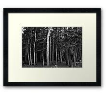 Forest Tree Views in Black and White  Framed Print