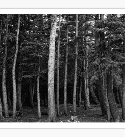 Forest Tree Views in Black and White  Sticker