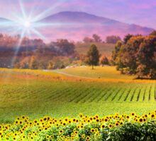 Biltmore Sunflower Field Sticker