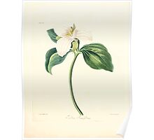 Floral illustrations of the seasons Margarate Lace Roscoe 1829 0248 Trillium Grandiflorum Poster
