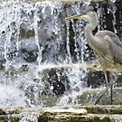 Water Fowl by Lin Taylor