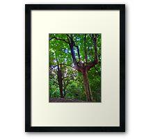 Tree and Foliage - Blackbutt Nature Reserve Framed Print