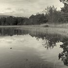The Quiet Reeds by EvilTwin