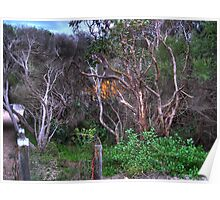 Fingal Bay walkway - Nelson Bay/Port Stephens Poster