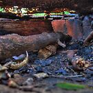 BBQ Inside - Blackbutt Nature Reserve by darkfirev3