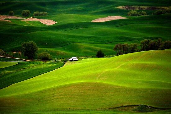 Green Fields by Olga Zvereva