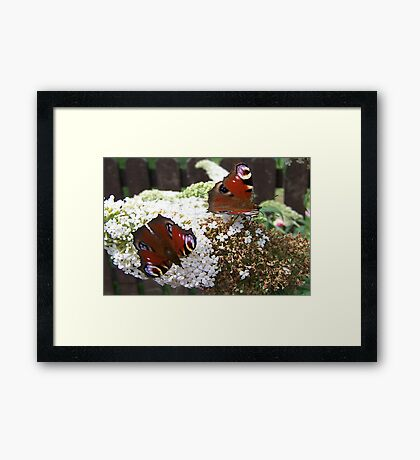 Two for the Price of One Framed Print