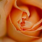 Soft Touch Of Orange by Reza G Hassani