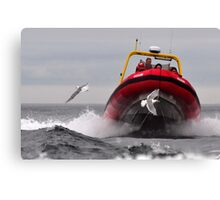 Flap Faster!!!!!  Canvas Print