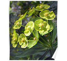 Green Bells Poster