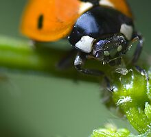 ladybirds lunch by kdwendorf