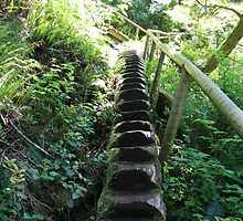 Stairway to? - Juan De Fuca Trail, Vancouver Island by bjohnston70