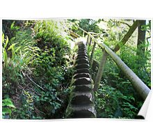 Stairway to? - Juan De Fuca Trail, Vancouver Island Poster