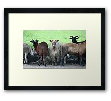 Who Goes There Framed Print