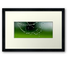 Morning Web Framed Print