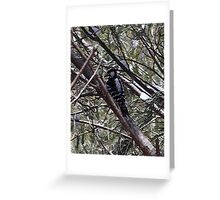 Awaiting Spring ~ Woodpecker in a Tree ~ Digital Art Photography Greeting Card