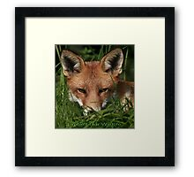 Cards - Protect Our Wildlife / Red Fox - None Captive Framed Print