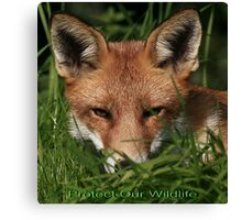 Cards - Protect Our Wildlife / Red Fox - None Captive Canvas Print