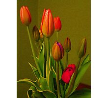 Tulips Against Green Photographic Print