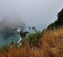 The fog comes on little cat feet ! by Nancy Richard