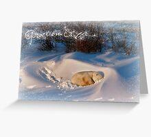 Peace & Goodwill from Yoga Bear Greeting Card