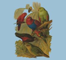 Parrots. [after rudolph becker] by albutross