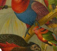 Parrots. [after rudolph becker] Sticker