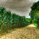 Cornfield by James  Birkbeck