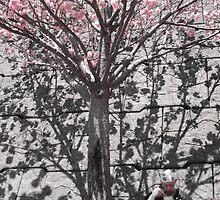 cherry blossoms in Japan -- a zen monk  by Ljikob