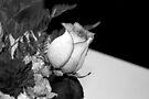 Monochrome Rose... by Christina Rodriguez