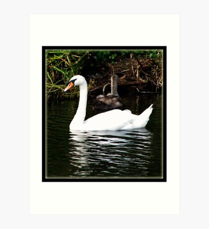 The Swan and the Ducklings Art Print