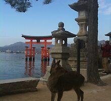 deer under the pine tree, Miyajima, japan by Ljikob