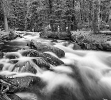 Roosevelt National Forest Stream in Black and White by Bo Insogna