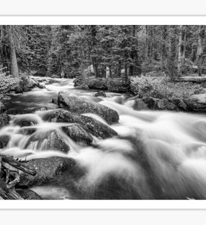 Roosevelt National Forest Stream in Black and White Sticker