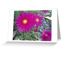 Pink Pointy Portulaca Petals Greeting Card
