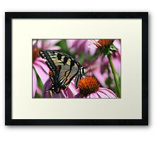Are you watching me? Framed Print
