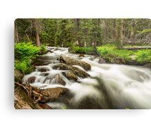 Roosevelt National Forest Stream Metal Print