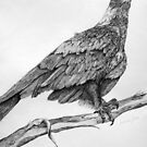 The Great Wedge Tailed Eagle by Lorraine  Stern