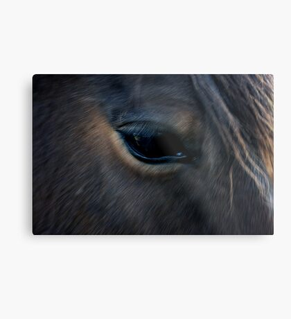Equine eye Metal Print