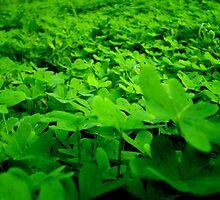 sea of green. by chaos josh.